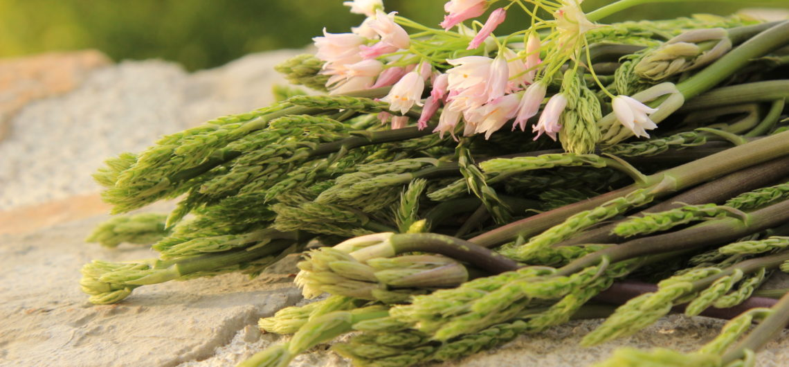 Wild asparagus and wild rose garlic flowers foraged from woodland near Lake Skadar in Montenegro