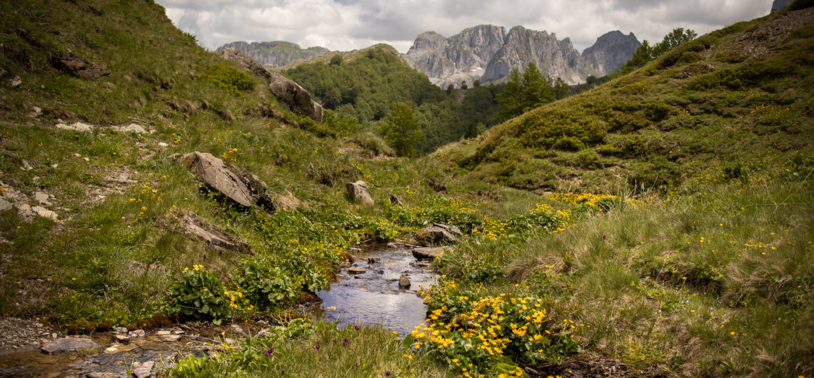 A valley in Montenegro's Accursed mountains with a blue river running through, grassy meadow filled with yellow wild flowers and behind, the dramatic rocky peaks rising up of the Karanfili massif