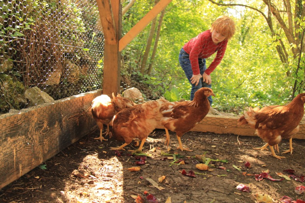 young kids taking care of chickens