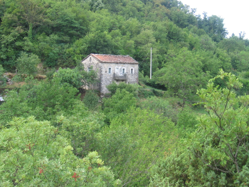 A ruined stone farmhouse surrounded by green forest
