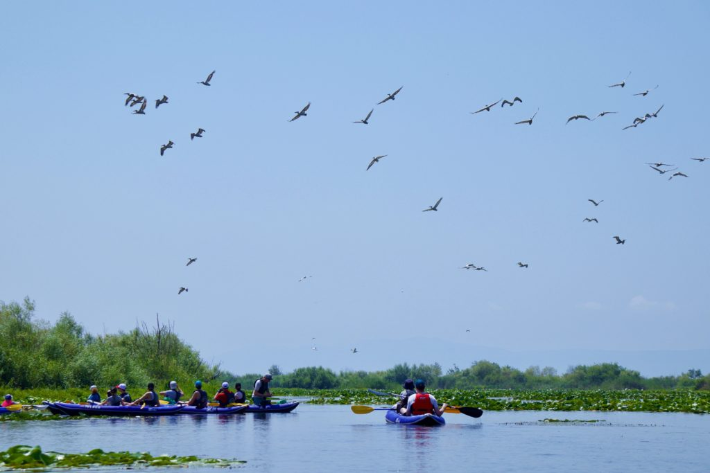 A group of kayakers visiting the Dalmatian Pelican colony at Lake Skadar in Montenegro on a sunny day with blue sky